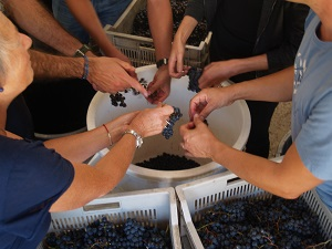 Organic Vineyard tour and oenology courses in France