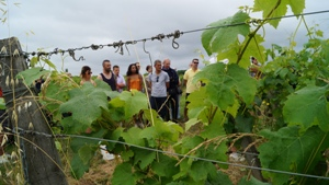 Vineyard experience in Bordeaux, France