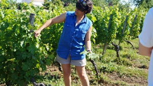 Wine making experience, biodynamic, Bordeaux