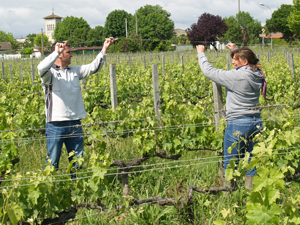 Vineyard experience in Bordeaux