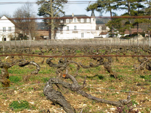 Wine experience in Burgundy at Domaine Chapelle