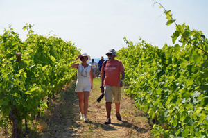 Vineyard experience in Languedoc, France