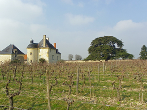 Wine Experience in Loire Valley, Chinon