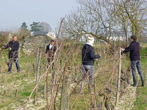 Adopt a vine in Loire Valley