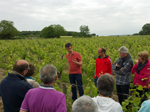 Vineyard Experience in Loire Valley, France
