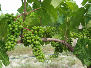 Organic winery tour in the Loire Valley