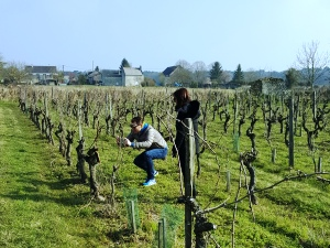 Rent a vine, Loire Valley, France