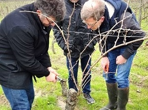 Pruning course as a wine gift box in France