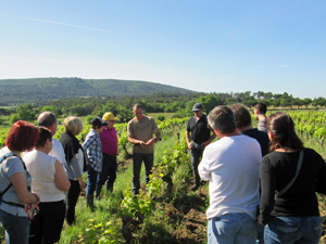 Vineyard experience in Rhone Valley, France