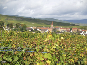 Discover a French winery during the Harvest Experience gift experience day in Alsace