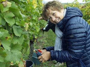 Pick your own grapes from your adopted vines in Alsace with the Gourmet Odyssey Wine Experience gift