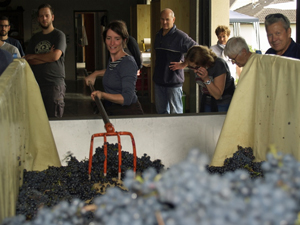 Learn how make wine in Alsace with the Gourmet Odyssey Wine Experience