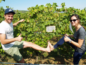 Adopt-a-vine gift in an organic French vineyard