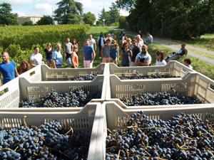 5eb14ac4a90 Blog Enjoying Wine   Gourmet Odyssey