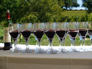 Organic wine tasting gift experience at the winery in Saint Emilion