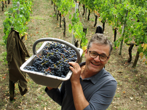A fantastic wine gift. Adopt some organic vines and harvest your own grapes