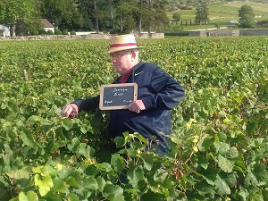 Wine-making experience at Domaine Chapelle, Burgundy, France