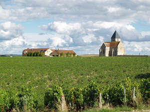 Harvest Experience gift in Chablis, Burgundy, France