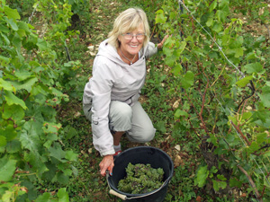 Adopt a vine gift and harvest your grapes in the vineyard