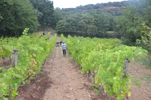 Vineyard experience in France, Languedoc
