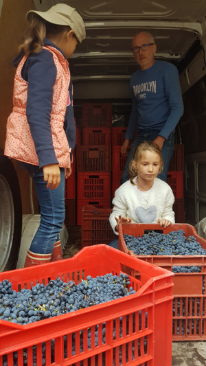 Participate in the French grape harvest