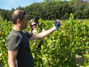 Grape picking gift in a French biodynamic vineyard