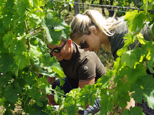 Original St Valentine's gift experience to share.  Adopt your own organic vines in France
