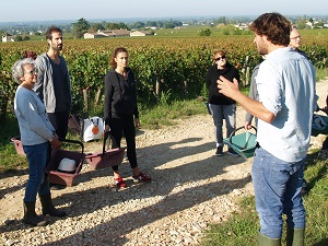 Wine course in a French vineyard for wine lovers
