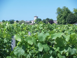 Vineyard experience in France