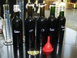 Wine tasting at the winery during a oenology stage in France