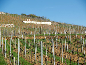 Original birthday gift idea for wine lovers.  Rent-a-vine in an an organic French vineyard