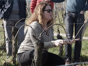 Vine tending experience day in Alsace, France