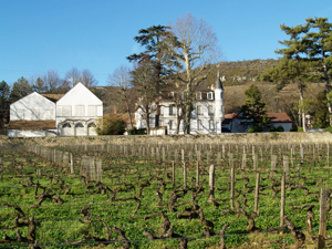Vineyard experience, Burgundy, France