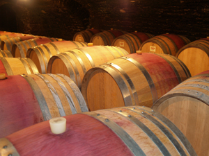 Wine making experience, Burgundy, France
