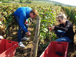 Great wine gift idea. Harvest your own vines in a French organic vineyard