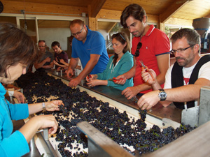 Wine-making experience weekend in Burgundy, France