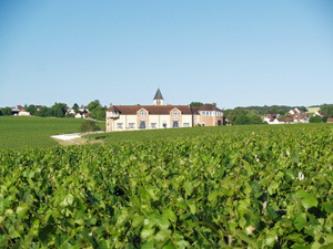 Original wine gift for wine lovers.  Adopt a vine in Chablis, France