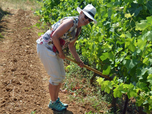 Vineyard experience gift to participate in working on the vines