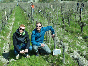 Rent some organic vines in the Loire Valley