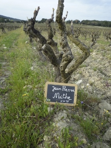 Rent a vine, Rhone Valley, France