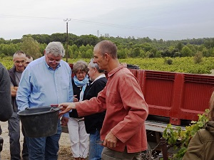 meet the winemaker at a harvest experience day in france