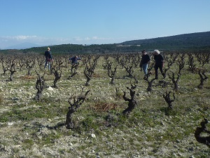 Rent-a-vine gift in the rhone valley in a biodynamic vineyard