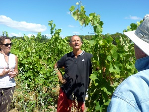 Wine-making experience gift in a biodynamic vineyard
