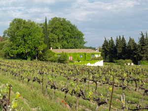 Rent some biodynamic vines in the Rhone valley and participate in making your own biodynamic wine