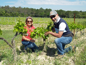 Adopt a vine wine experience in the Rhone Valley vineyard
