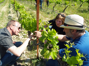 Working in the vineyard