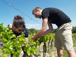 Adopt a vine and get involved in making your own biodynamic wine