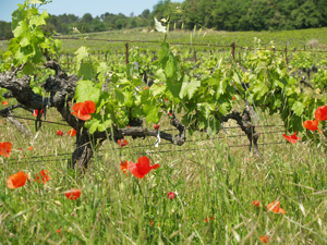 Biodynmaic vineyard tour in the Rhone Valley, France