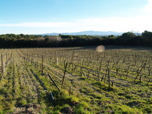 Renta a vine wine experience in the Rhone Valley, France