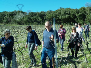 Vineyard guided tour with the winemaker